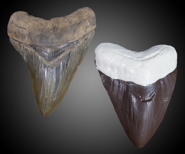 chocolate shark teeth