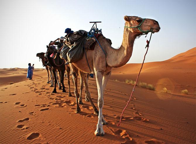 На верблюде по южному Тунису